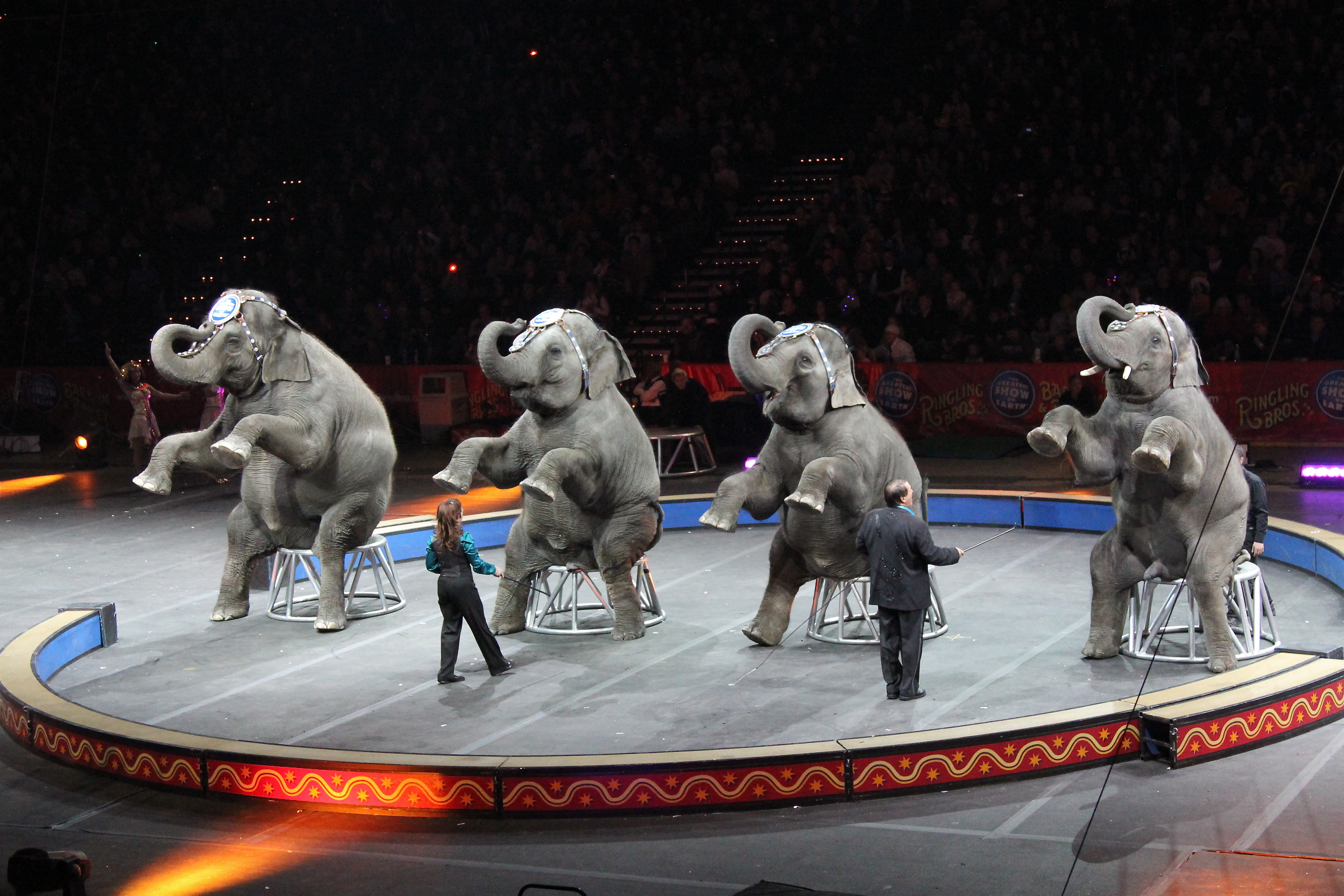 Circus Animals Pictures To Pin On Pinterest